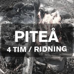 Pitea-4tim